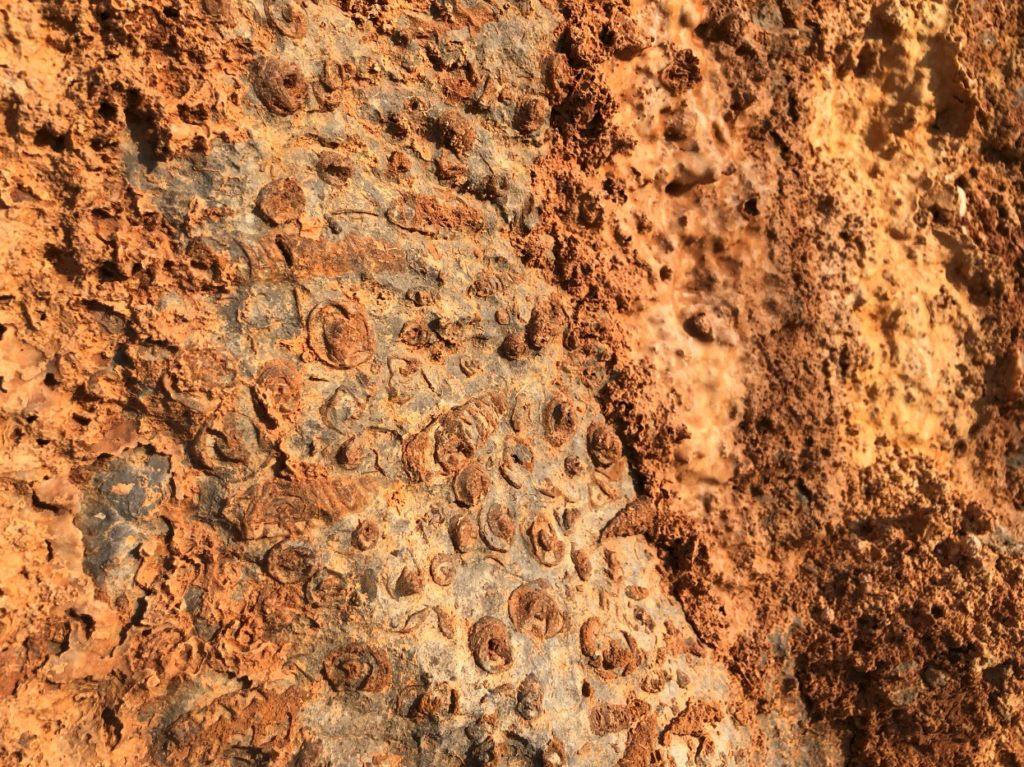 pietra natural Jurassic Stratum Nerinea